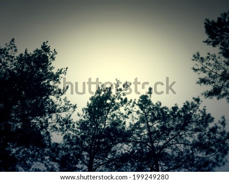 Green pine branches in the forest in spring time. - stock photo