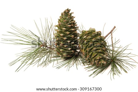 Green pine cones isolated on white