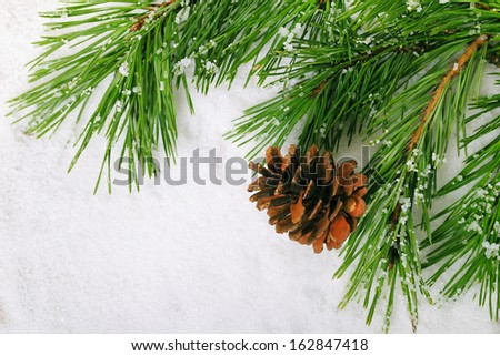 Green pine tree branch with cone on snow background