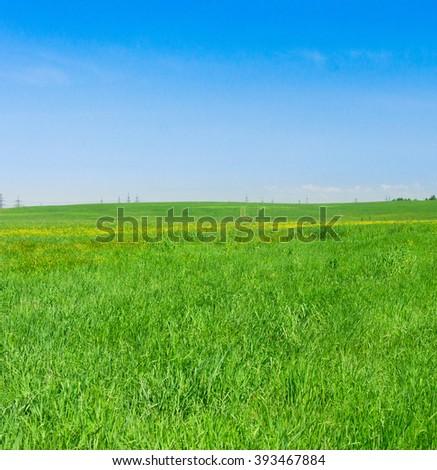 Green Plain Sunny Summertime  - stock photo
