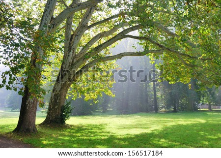 Green plane trees and sunshine rays in the background - stock photo