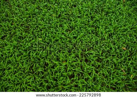 Green Plant - stock photo