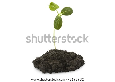 green plant a white background