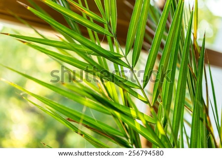 Green plant against window with beautiful sunshine - stock photo