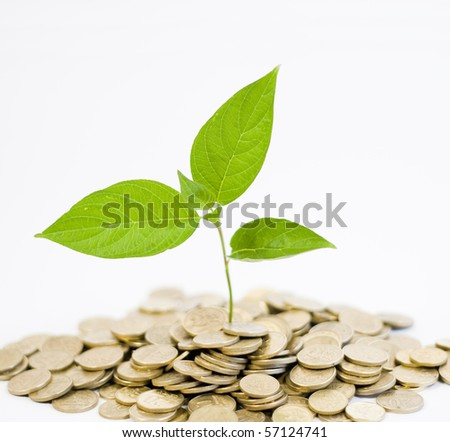 green plant and golden coins