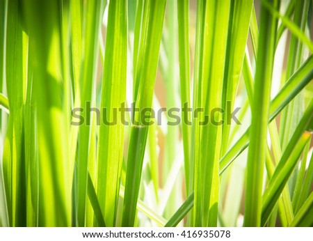 green plant background - stock photo