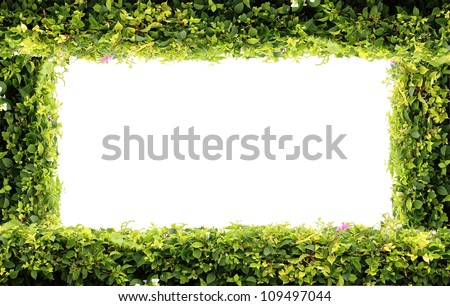 Green plant background on white isolated - stock photo