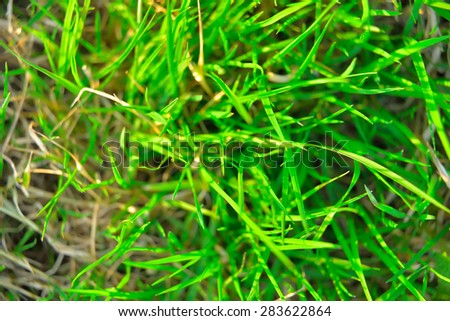 green plant background, young grass. background green juicy young lawn - stock photo