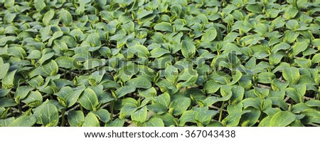 Green plant background. Young herbs. - stock photo