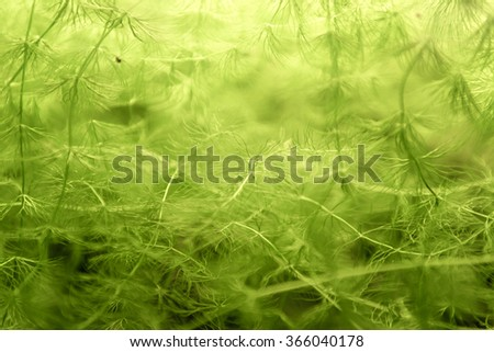 Green plant closeup photo underwater background texture - stock photo
