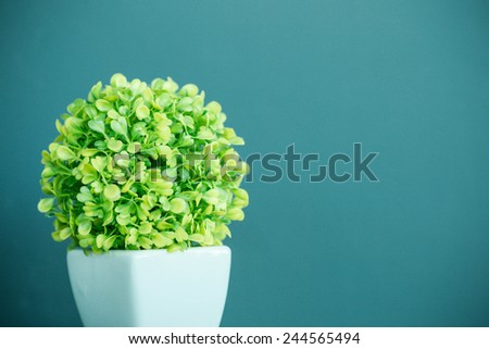 Green plant  for room - stock photo