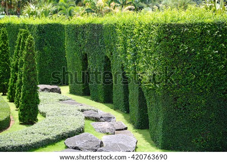 Green plant garden in the Park. - stock photo