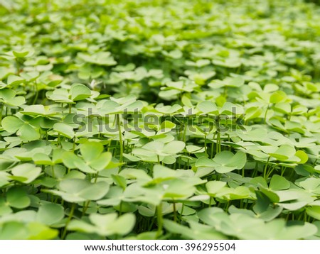 green plant, green clover, st.patrick day of background - stock photo