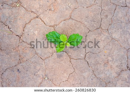 green plant growing between the cracks of a arid and dry desert - stock photo