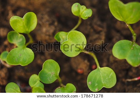 Green plant growing from seed in organic soil. - stock photo