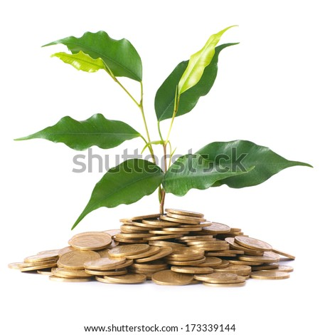 Green plant growing from the coins. Money financial concept. - stock photo