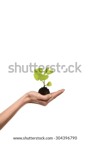 Green plant growing in hand - isolated on white
