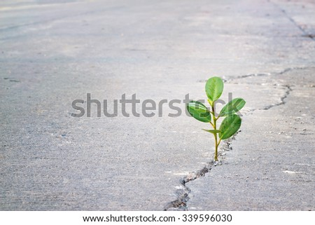 Green plant growing on crack street, blank text - stock photo