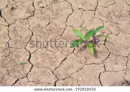 green plant growing on dried ground  - stock photo