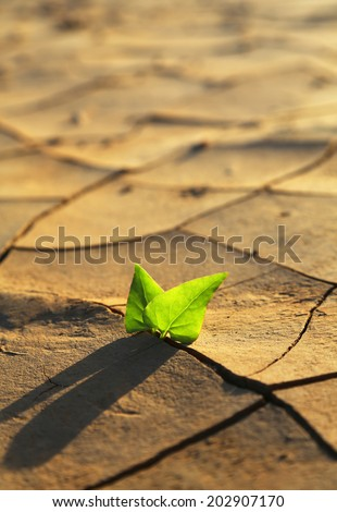 Green plant growing out of cracks in the earth