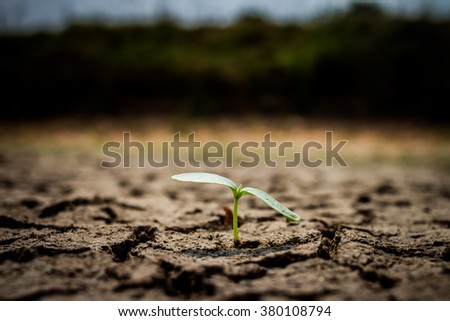 Green plant growing out of cracks in the earth - stock photo