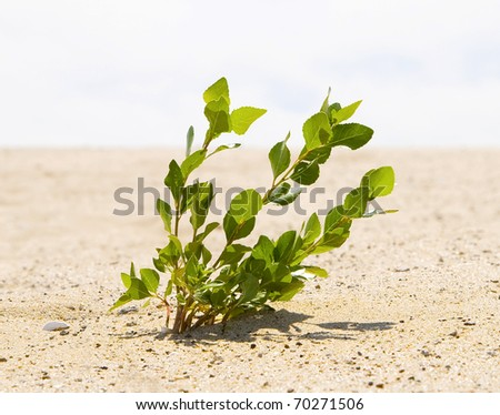 Green plant growing trough sand of the desert - stock photo