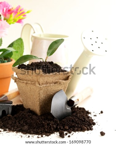green plant grows from the ground with garden tools on a white background