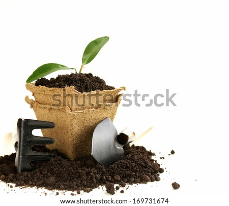 green plant grows from the ground with garden tools on a white background - stock photo