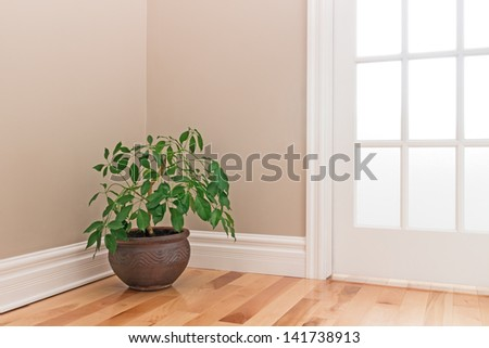 Green Plant In A Clay Pot Decorating The Corner Of A Room With A Glass Door