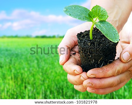 Green plant in arms with green field background. Agriculture concept. - stock photo