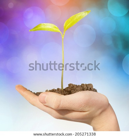 Green plant in arms with sunlight - stock photo