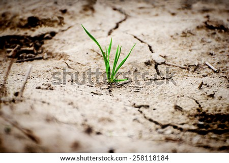 Green plant in dried cracked earth. - stock photo