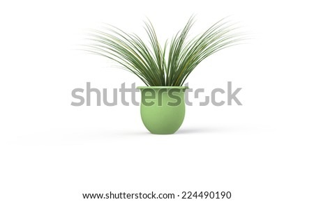 Green plant in green vase isolated on white - stock photo