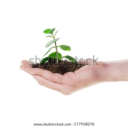 Green plant in hand isolated on white background