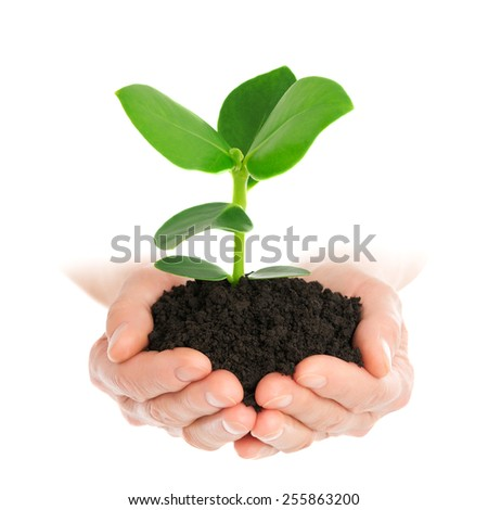 Green plant in hand new life - stock photo
