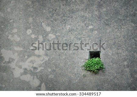 Green plant in little hole in the wall - hope concept