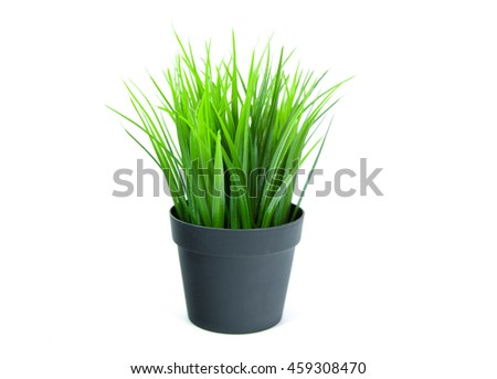 Green Plant in Pot on white background