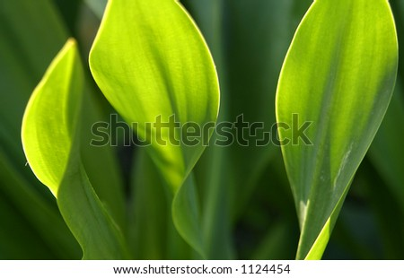 green plant in sunlight