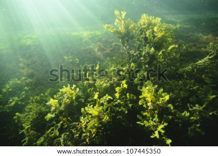Green plant in water - stock photo
