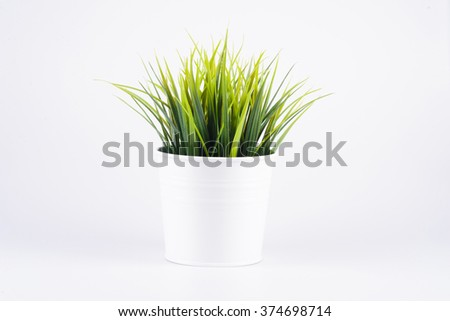 green plant in white pot on white