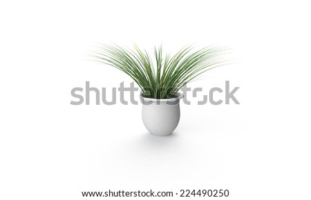 Green plant in White vase isolated on white - stock photo