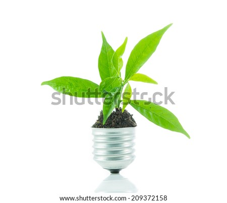 Green plant new life on lamp out of a bulb, green energy concept on over white background - stock photo