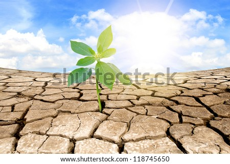 Green plant on background of cracked soil - stock photo