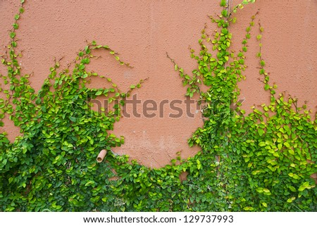 Green plant on brick wall