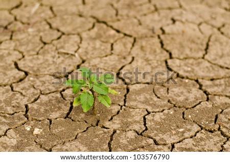 Green plant on crack mud - stock photo