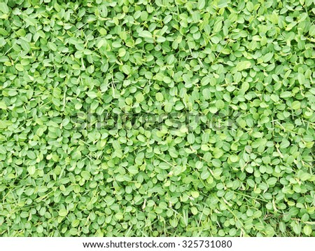 green plant on grass - stock photo