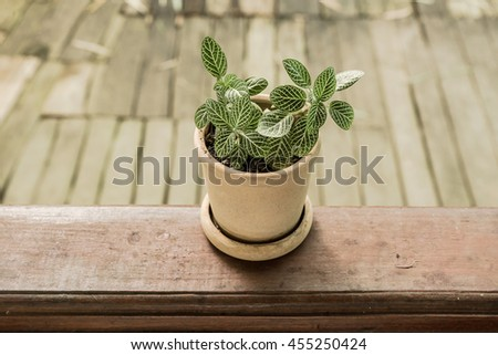 Green plant on wood Still Life Natural Three with blurry background