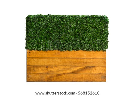 Green Plant on wooden box for fence