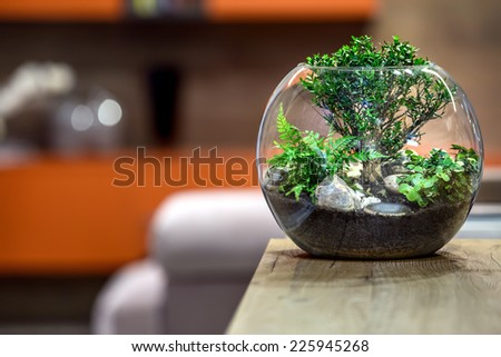 Green plant on wooden table. House decoracion. - stock photo