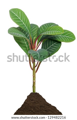 green plant / plant
